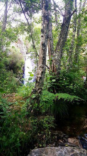 Florest River View CascataS Rio Paisagem Natureza🍁 Natureza 🐦🌳 Water Penhasco River