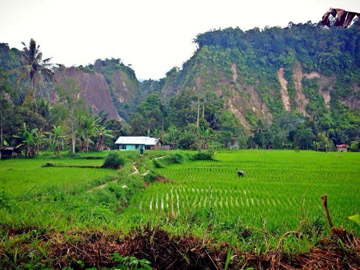 Back To Nature My Village Ngarai Sianok, Padang Eye4nature