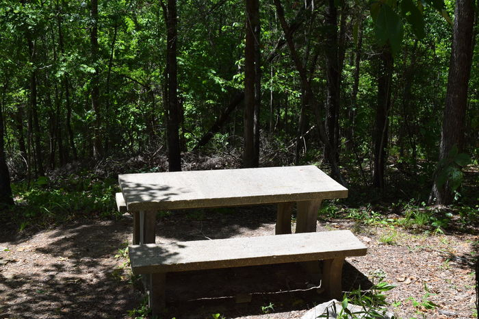 Alabama Alabama Outdoors BBQ Bench Chewacla State Park Forest Lush Foliage Non-urban Scene Outdoor Alabama Outdoors Park Bench Water at Chewacla State Park,Auburn, Alabama Abstract Nature Outdoor Photography