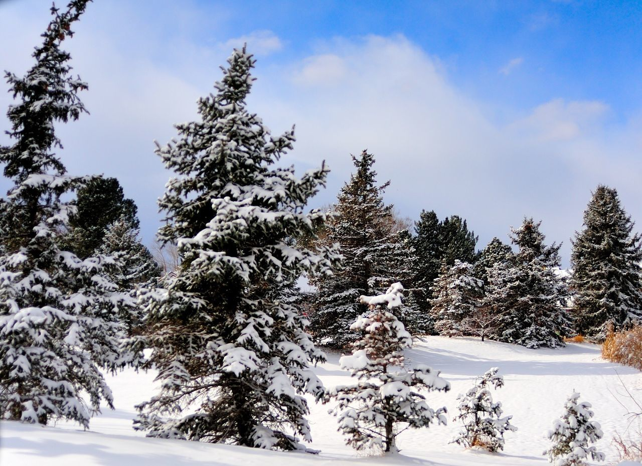 snow, cold temperature, winter, tree, nature, tranquil scene, beauty in nature, tranquility, white color, sky, scenics, no people, mountain, day, outdoors, landscape, cloud - sky, spruce tree