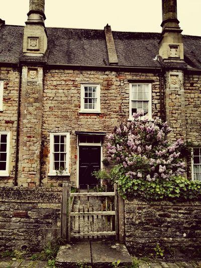 Flower Lilac Lilac Tree House Old House House Front White Windows Outdoors No People Day