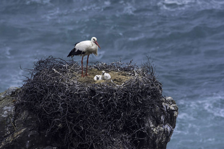 Birds perching on nest