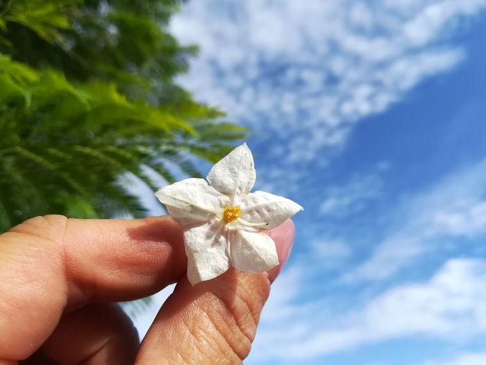 Cropped hand of woman holding flower against cloudy sky