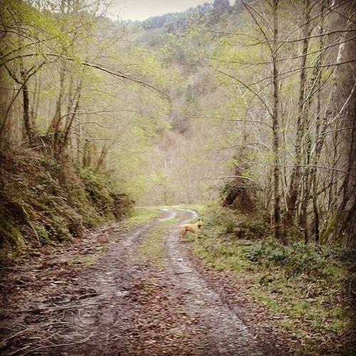 Por los bosques de O Incio , entre viejas minas de hierro