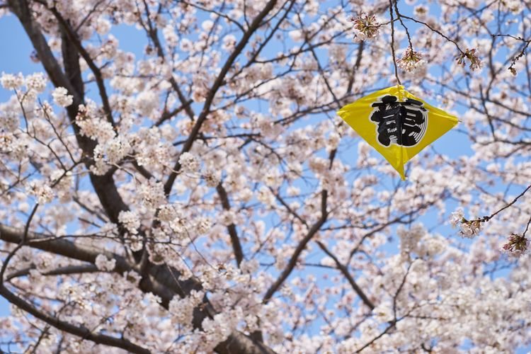 Eye4photography  EyeEm Best Shots Cherry Blossoms Sakura Springtime Blossom Flower Branch Flowering Plant Tree Plant Fragility Nature Growth Beauty In Nature Cherry Blossom Freshness Day Low Angle View Focus On Foreground Outdoors Cherry Tree No People Vulnerability