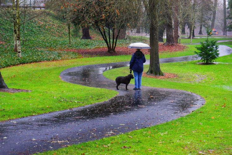 Dog Walking Rain Umbrella S Curve Dog Woman Best Friends