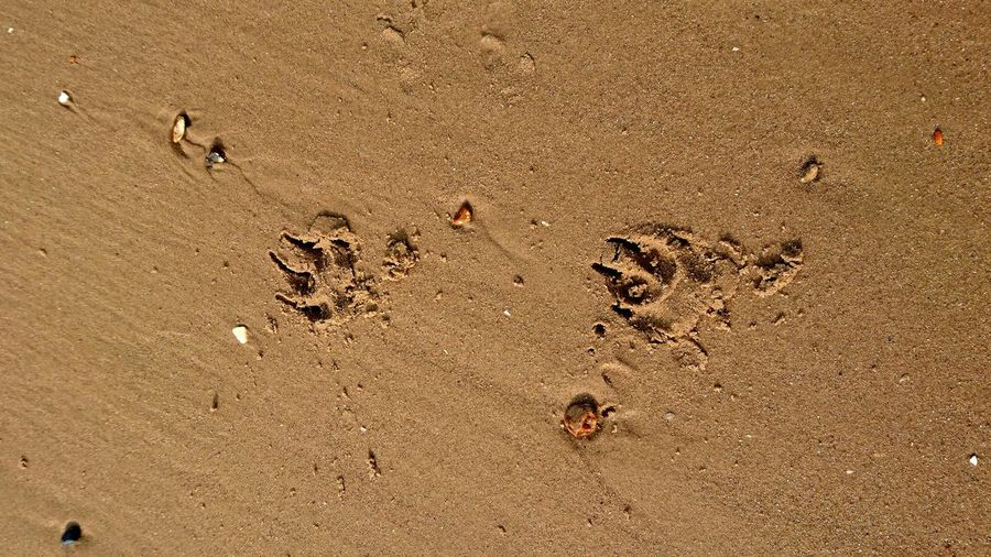 Close-Up Of Paw Print On Sand