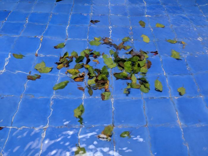 High angle view of flowering plant against blue water
