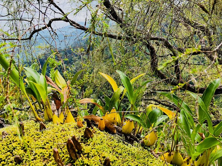 Kuala Mu sungai siput hiking Forest Photography Green Color Green Color No People Nature Beauty In Nature Forest Scenics - Nature Outdoors EyeEmNewHere