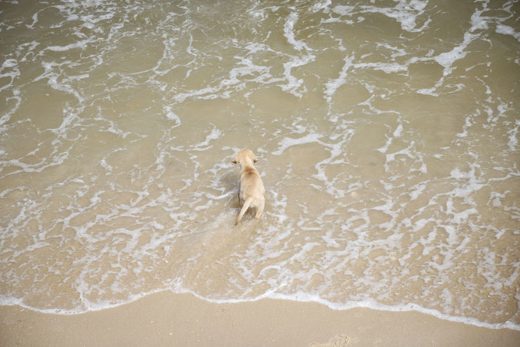 Dog in a water
