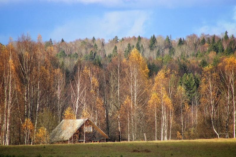 Fall in village of Kostroma region Built Structure Architecture Tree Building Exterior House Tranquility No People Tranquil Scene Day Outdoors Field Scenics Landscape Sky Bare Tree Grass Nature Beauty In Nature The Week On EyeEm Forrest Photography Lanscape Photography Village View Fall Beauty Lines Of Color Lonely House Autumn Mood