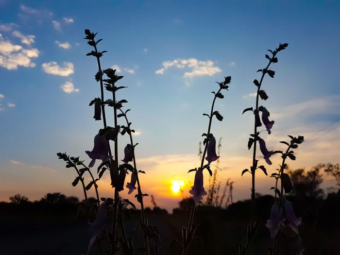 sunrise through