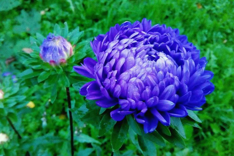 Purple Growth Flower Nature Plant Outdoors Day Beauty In Nature No People Fragility Close-up Freshness