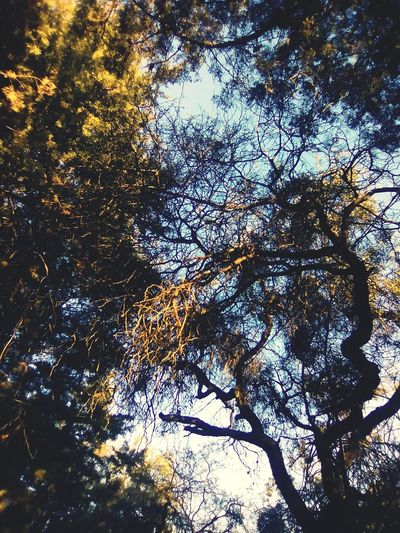 misma foto! Tree No People Beauty In Nature Nature Day Sky EyeEm Nature Lover Comonfort Guanajuato Beautiful Horror Photography Beauty In Nature