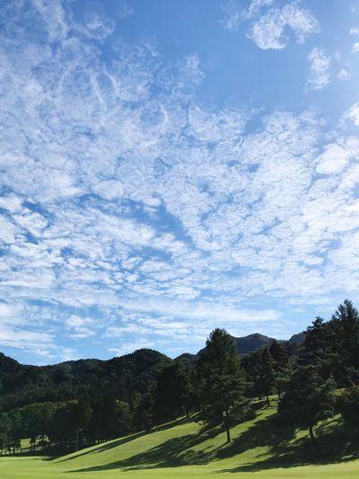 秋空 Tree Sky Plant Cloud - Sky Beauty In Nature Scenics - Nature Landscape