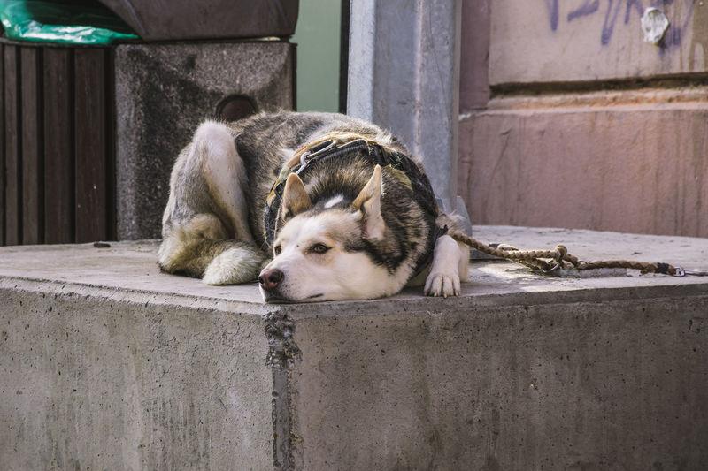 Dog sleeping on wall