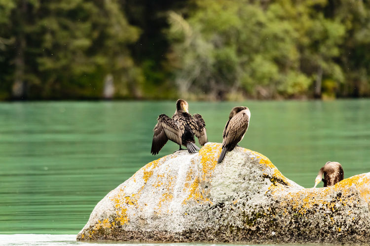 Rear View Of Three Wild Birds Against Lake