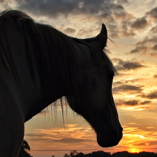 """""""Nearer to the earth's heart. Deeper within its silence: Animals know this world, in a way we never will."""" EyeEm Nature Lover Tadaa Community Sunset Horse Love"""