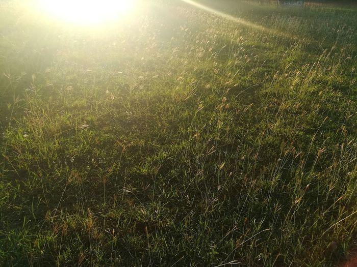 Full frame shot of grassy field on sunny day