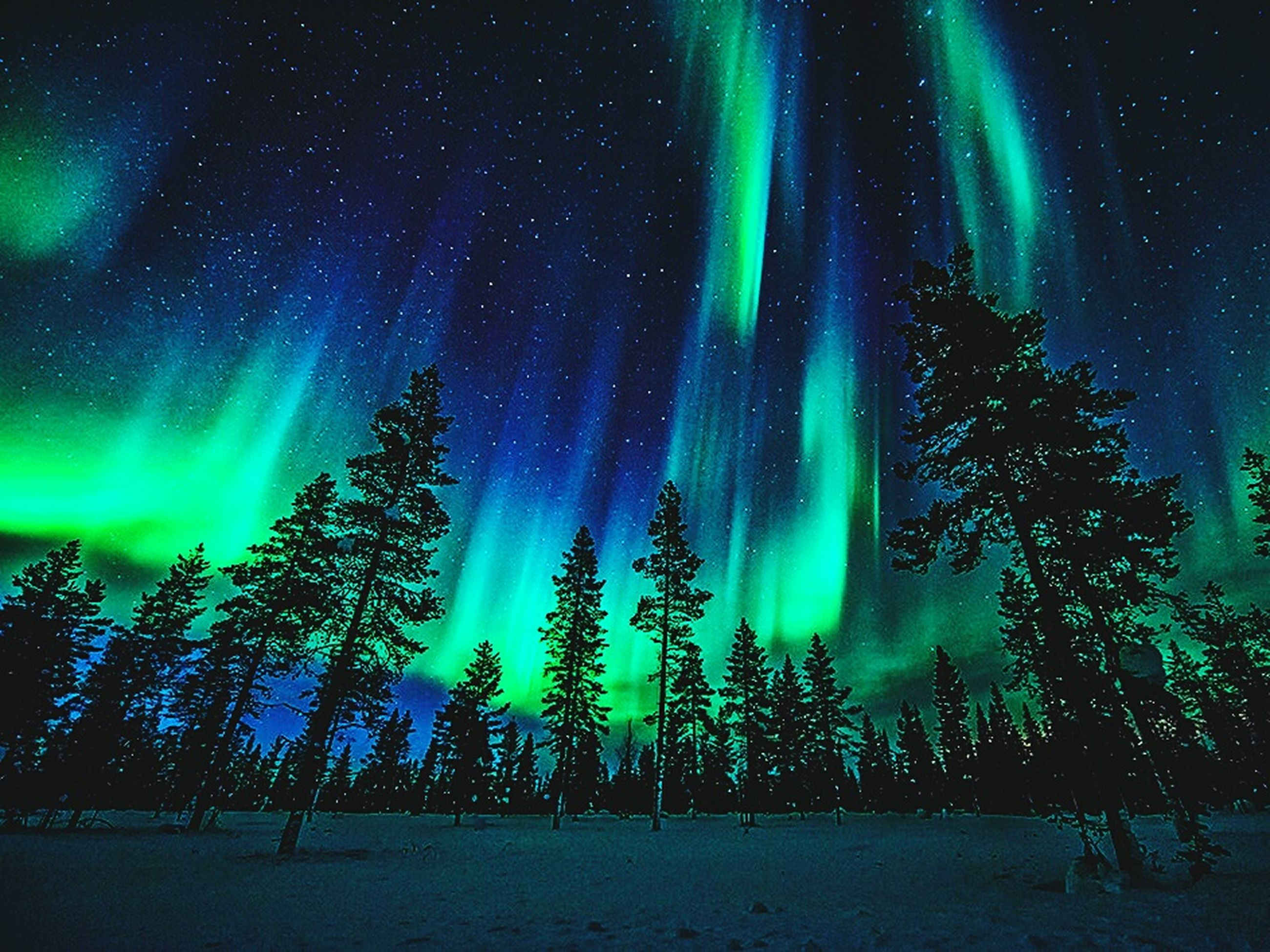 scenics, tranquil scene, low angle view, night, tree, beauty in nature, tranquility, star - space, sky, aurora borealis, majestic, nature, silhouette, dramatic sky, awe, glowing, green color, environment, astronomy, tree trunk, star field, dark, non-urban scene, back lit, outdoors, ethereal, atmospheric mood, multi colored, space, branch