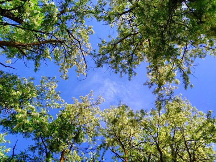 Tree Branch Tree Area Forest Blue Leaf Pine Tree Sky Animal Themes Green Color Treetop Tree Canopy  WoodLand Tree Trunk Directly Below Plant Bark Woods Bark Long Shadow - Shadow
