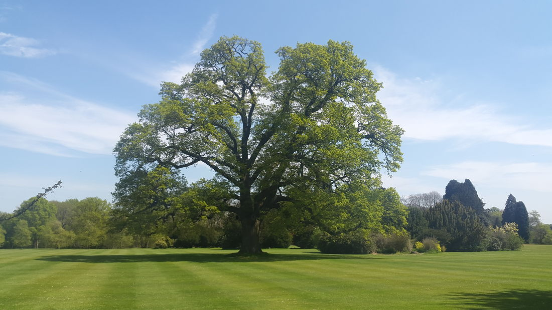 Tree Tree And Sky Nature Naturephotography Grass Bluesky Spring Samsungphotography SamsungGalaxyAlpha The Great Outdoors - 2016 EyeEm Awards