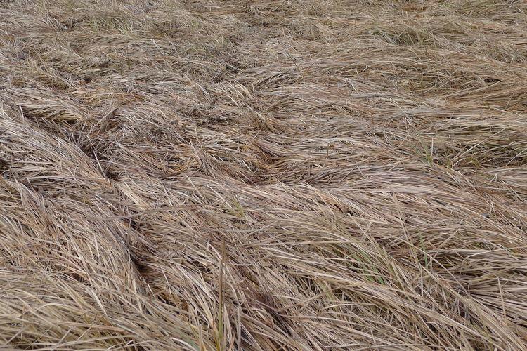 Full frame shot of hay bales on field