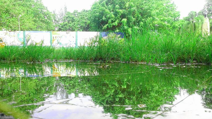 Beauty Of Nature Is Everywhere EyeEmNewHere Reflection Green Color Growth Day Outdoors No People Plant