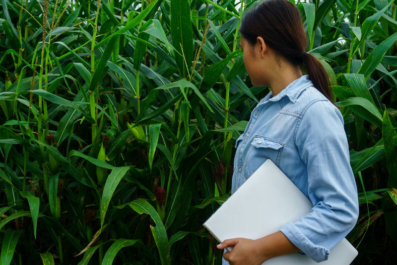 A young girl inspects the corn and notes the observations found. Agricultural Technology Care Check Farm Guards Hello Nature Plant Quality Inspection Rain Stay Alerted Agricultural Corn Girl Guard Guarding Laptop Look Note Notebook One Person See See Plant Stay Technology