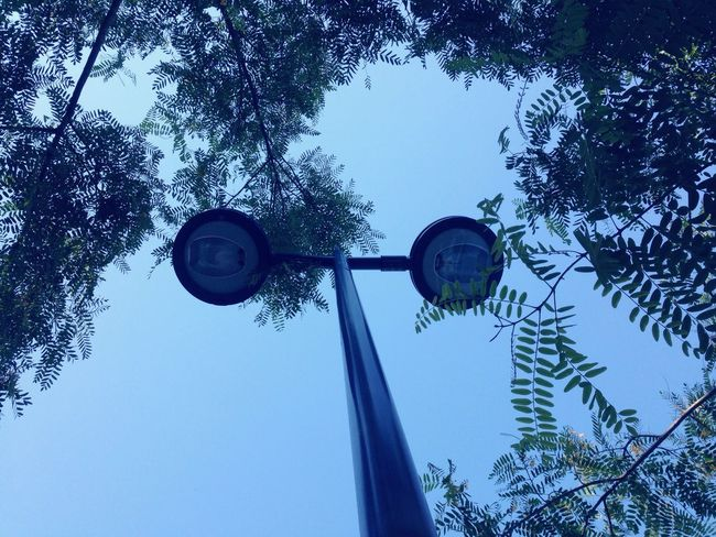 Green Blue Leaves Sconce Light And Shadow View From Below The OO Mission Sky Blue Sky
