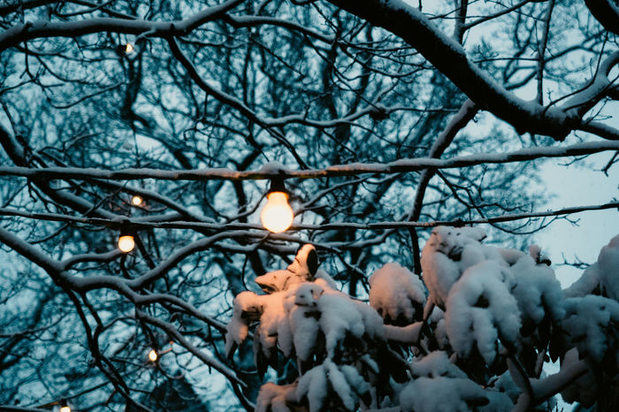 Xmas Lights The Week On EyeEm Winter Xmas Lights  Bare Tree Beauty In Nature Branch Chrismas Lights Close-up Day Fragility Freshness Growth Illuminated Light Bulb Nature No People Outdoors Sky Snow Tree Winter Winterwonderland