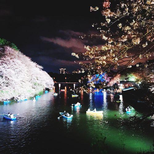 Cherry Blossoms 千鳥ヶ淵 桜 Water Illuminated Nature Night Reflection Waterfront Tree