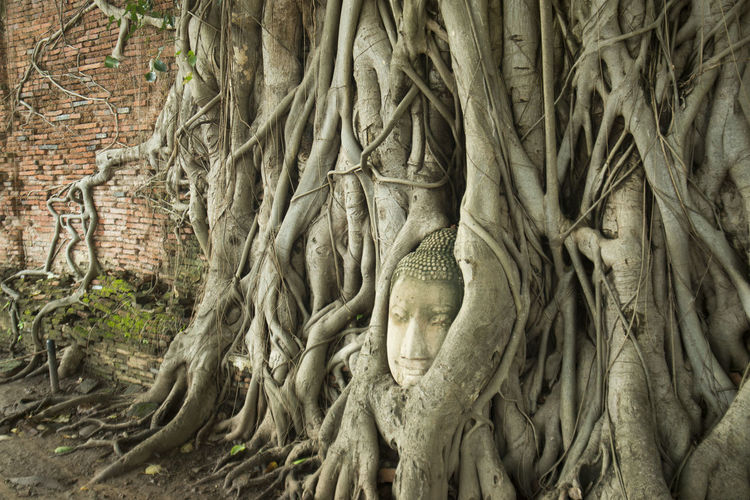 Close-up of buddha statue in tree roots