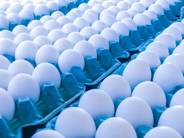 Eggs in cardboard Large Group Of Objects Egg Abundance Food Arrangement Blue In A Row Backgrounds Repetition Box Freshness White Color Day Egg Carton Cardboard Box White Eggs Eco Food Chicken Fragilty Healthy Eating Eggshell Hollow Market