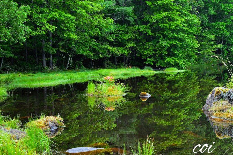 Memories Traveling 絶景 Beautiful Nature 夜明け Landscape Emeyebestshot こんな美しい場面に出会えたこと感謝。刻々と変わる水面を見つめて、鏡のようになった瞬間をとりのさえずりを聞きながら待つ、幸せな瞬間