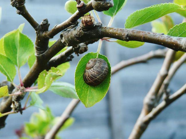 Acrobatic Snail Apple Trees Garden