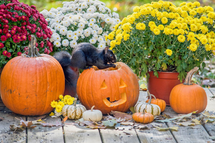 View of pumpkins on flowers