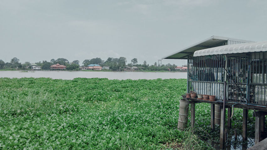 local river side water hyacinth Riverside Thailand Gloomy Day Hyacinth Local Town River Sky Water