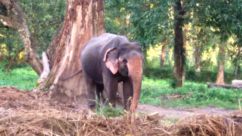 Baby elephant at Jaldapara National Park, Doors, West Bengal, India Nature Beauty In Nature Outdoors Tree Animals In The Wild Elephant