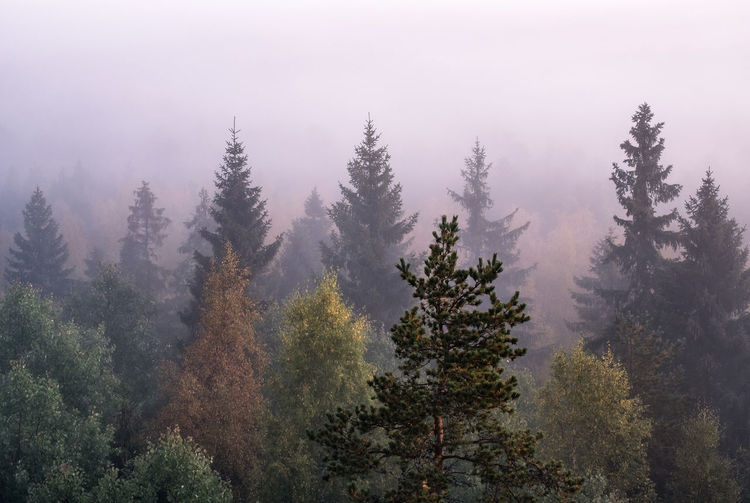 Morning fog and sunrise in Torronsuo National Park, Finland Autumn Misty Morning Orange Pine WoodLand Atmospheric Mood Beauty In Nature Color Day Fall Fog Foggy Forest Growth Haze High Angle View Landscape Mist Nature No People Outdoors Pine Tree Tranquility Tree