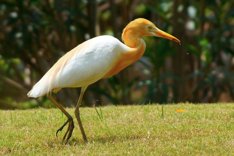 White crane bird Bird Photography Wildlife & Nature Wildlife Photography Beak Beauty In Nature Bird Close-up Crane - Bird Day Focus On Foreground Grass Nature No People Ornithology  Outdoors Wild Wilderness Wildlife