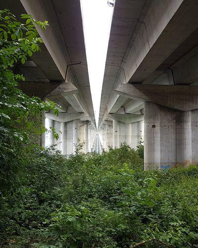 I... Architectural Column Passageway Grass Area Grassland Under Historic Rainfall Passage