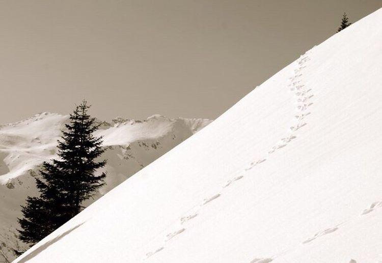 Blackandwhite Montagne