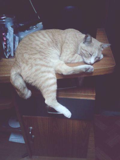 new position.. sleeping Cat Lovers Cat♡ Ilovecats Lovepet love.