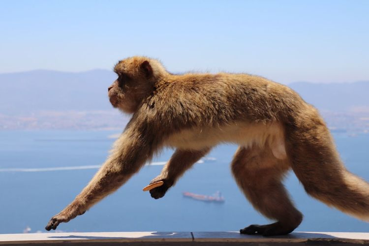 Side view of a monkey