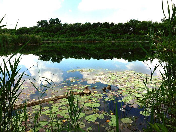 Lily Pads Lake