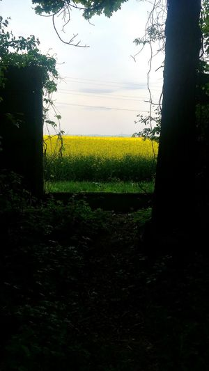 Yellow Tree Sky