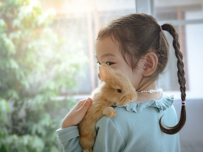 Kind little cute girl 5-6 years old holding a baby brown rabbit on shoulder near the window. Child with a gentle heart, loves animals. Young Wildlife Wild White Thai Tender Tame Soft Smile Small Shoulders Rodent Rabbit Pretty Pets Nature Mild Mammal Lovely Love Looking Little Kid Hold Happy Hair Girl Gentle Furry Fluffy Fleecy Elegant Easter Ear Domestic Cute Cuddly Creature Closeup Children Childhood Child Caucasian Care Bunny  Brown Beautiful Asian  Animal Adorable
