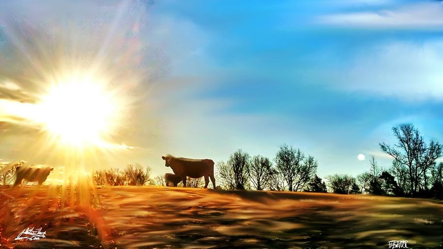 Photoart Photoediting Cattle Cow Enjoying Life Country Life Farmlife Downonthefarm Rural Landscape Farmcountry Photography Farmland Farm Photos Cattlefarm Cows Cowlover Cowlove Sunrise Beef Farming Farm Life Farm Animals ILoveThisLife Cowlife Moomoos