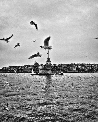 Maidenstower Kızkulesi Istanbul Turkey Istanbul Bosphorus Sea Photoshoot Eyeemphotography EyeEm Best Shots Photograph Taking Photo Photo PicturePerfect EyeEmBestPics Eye4photography  Photography Pic Eyeemphoto Photographylovers Photooftheday Pictureoftheday PhonePhotography Picture EyeEm Photographer